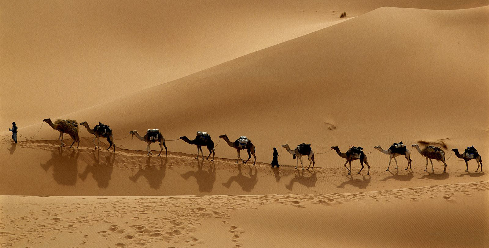 Everything you ever wanted to know about camels... but were afraid to ask!