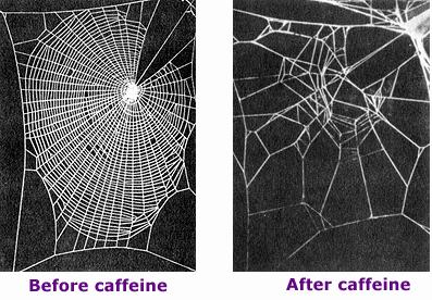 Image of spider web made by drugged spiders