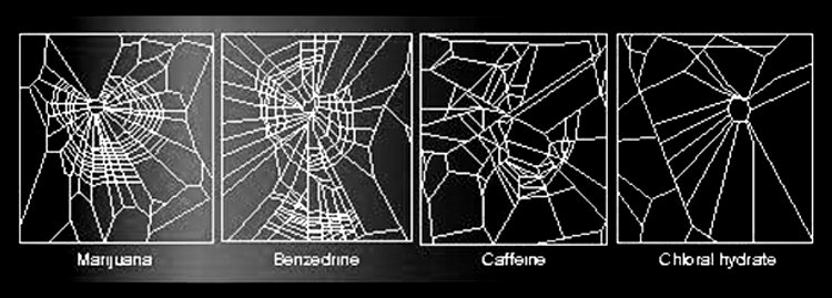Image of spider webs made by drugged spiders